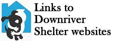 animal-shelter2
